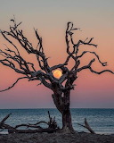 Dead Tree with Moon and Ocean