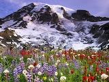 Winter Flowers, Mount Rainier National Park...