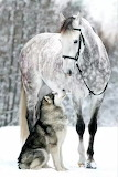 Alaskan Malamute dog with Orlovsky Trotter horse