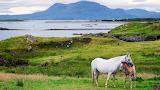 Connemara (Irlande)