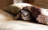 Mirada de Gat - Cat Glance