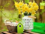 ☺♥ Yellow Daffodils...