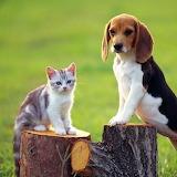 Two Cute Friends...
