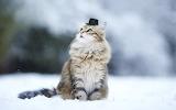 Cat-hat-animals-nature