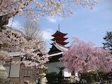 Pagoda Miyajima Island