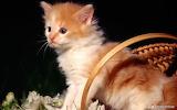 Kitten-pet-grass