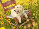 Descansando entre flores silvestres