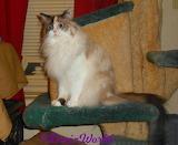 DezizWorld's Raena sits on cat tree