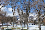 Wellsville Park Trees and Mountains by Mandy Ann Denison