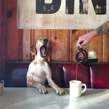 Maddie the Coonhound-coffee
