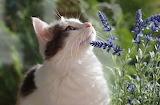 mistress planted catnip!
