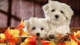 #Cute Puppies