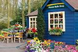Rotate the Flower Bulb Shop