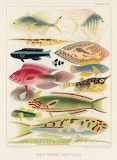 """Science tumblr scientificillustration """"The Great Barrier Reef of"""
