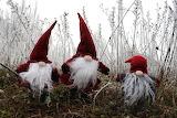 Christmas Gnomes by Brigitta Schneiter