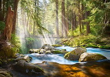 Forest-stream-of-light