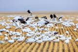 Jason Savage Photography Lovely Flock Of Birds