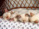 Cute-sleeping-baby-kitten