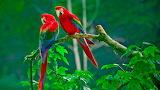 Bird - Ocell