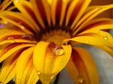 Flores 805