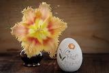 Flower tulip blossom bloom 15