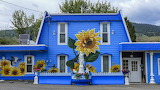 blue house with painted sunflower