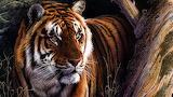 Tiger oil paint