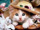 #Kitty in a Hat