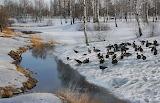 Птицы, весна, ручей