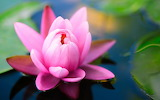☺ Pretty water lily...