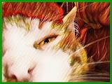 Super Close-up Ginger Cat
