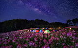 Flower Camp