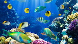 POTW Underwater World