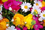 Flors - Flowers