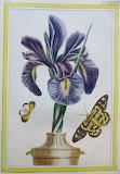 Botanique (9)