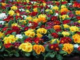 Florales 055