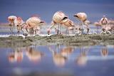Baby Flamingos...