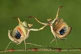 LET'S DANCE by Hasan Bagler