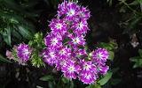 Flower garden plant (357)
