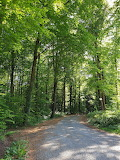 palatian forest