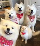 Sheriff Cat & posse