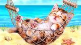 Das Kätzchen in der Hängematte