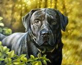 Black dog - portrait