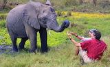 Ivory Orphan ~ Kenya