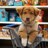 ☺♥ Cute shopping helper...♥