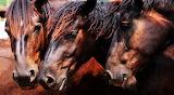 #Wild Horses