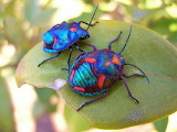 #Colorful Insects