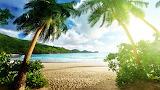 Tropics Sea Scenery Palma Beach