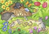 Animals in our Garden