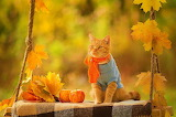 ☺♥ Autumn...